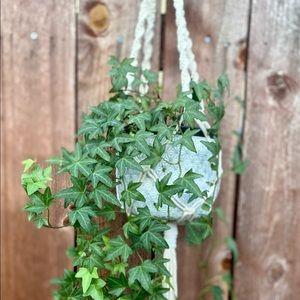Other - Macrame plant holder